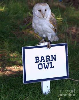 Joe Cashin - Barn Owl