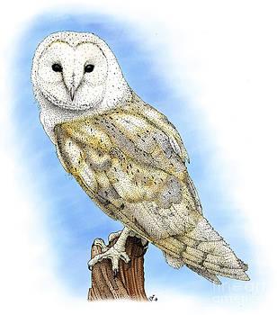 Roger Hall - Barn Owl