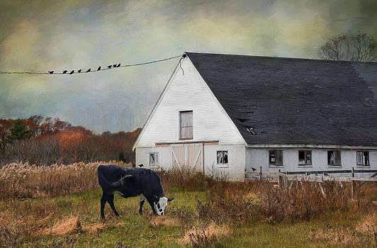 Barnyard Bliss by Robin-lee Vieira