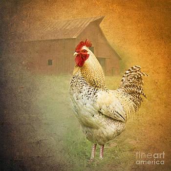 Barnyard Boss by Betty LaRue