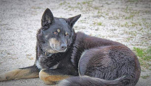 Barnyard Dog by Carolyn Ricks