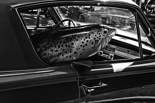Barracuda by Julie Palyswiat