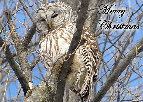 Barred Owl Greeting Card by Deanna Wright