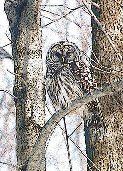 Barred Owl by Jon Lord