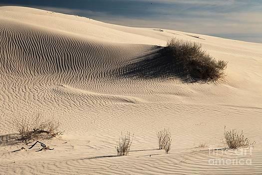 Adam Jewell - Barren Dunes
