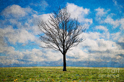 Barren Tree by Jeanette Brown