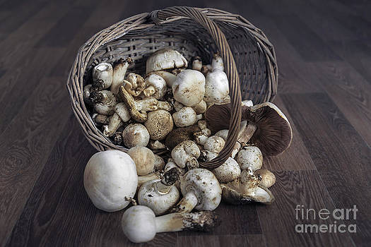 Svetlana Sewell - Basket of Mushrooms