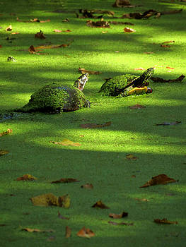 Basking by Azthet Photography