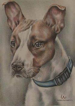 Baxter by Lisa Marie Szkolnik