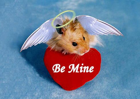 Jeanette K - Be Mine Angel Hamster