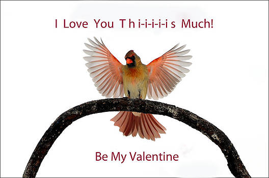 Randall Branham - Be My Valentine Cardinal Spread