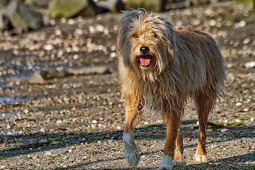 Karol  Livote - Beach Dog