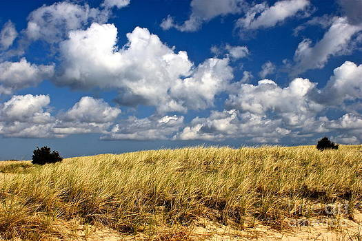 Amazing Jules - Beach Dunes