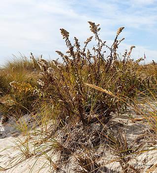 Michelle Wiarda - Beach Floral
