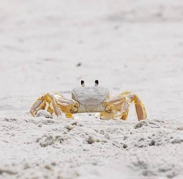 Judy Hall-Folde - Beach Guard