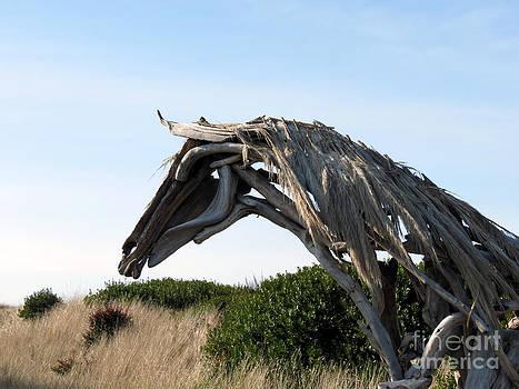 Beach Horse by Gayle Swigart