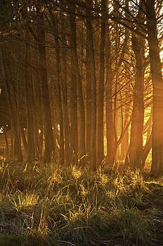 Beach Light Through the Trees by Judi Baker