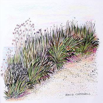 Beach Path by David Cardwell