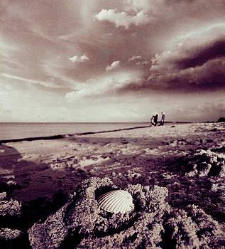 Beach Researchers by Florin Birjoveanu