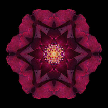 Beach Rose I Flower Mandala by David J Bookbinder