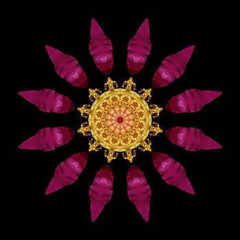 Beach Rose IV Flower Mandala by David J Bookbinder