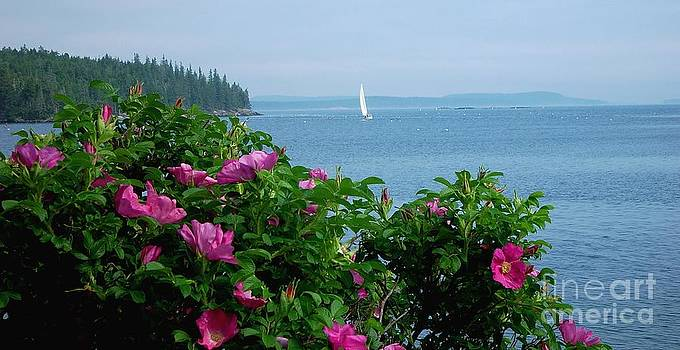 Beach Roses by Christopher Mace