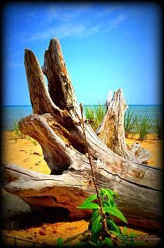 Beach Wood by Terri K Designs