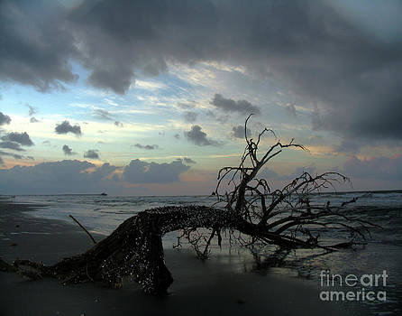 Beached Tree by Douglas Stucky