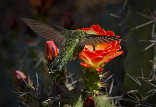 Saija  Lehtonen - Beak Deep in Nectar