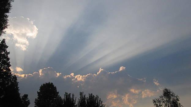 Beams of Sunlight  by MaryEllen Frazee