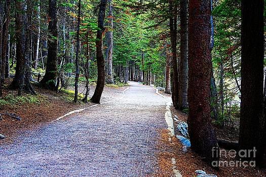 Jon Burch Photography - Bear Lake trail