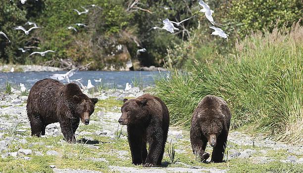 Bear Patrol by Donna Quante