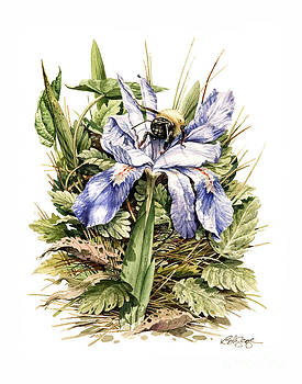 Bearded Dwarf Iris by Bob  George