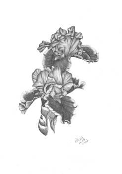 Bearded Irises by Patricia Hiltz