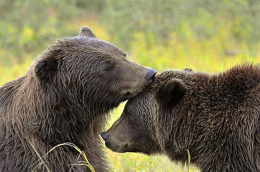 Bearly Love by David Marr