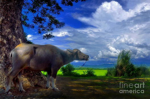 Beast of Burden by George Paris