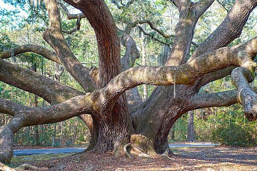 Beaufort Oak by Bill LITTELL