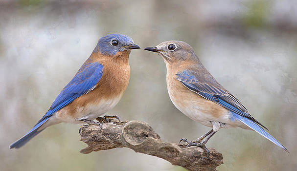 Beautiful Bluebirds by Bonnie Barry