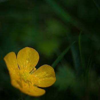 Beautiful Buttercup by Jen Baptist