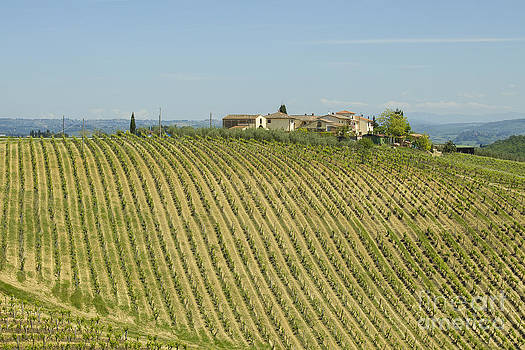 Patricia Hofmeester - Beautiful Chianti region in Tuscany