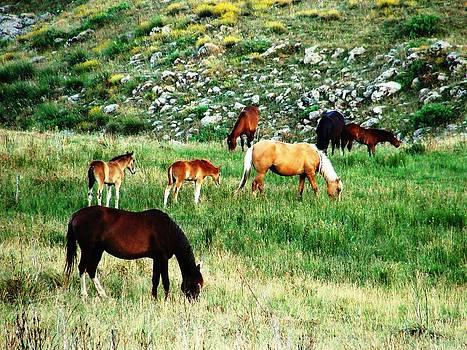 Beautiful Horses by Faouzi Taleb