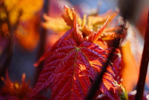 Beautiful Leaf by Douglas Hamilton