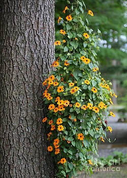 Sabrina L Ryan - Beautiful Orange Hanging Flowers