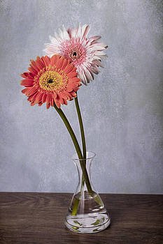 Beautiful pink  and orange gerber daisies in clear vase by Arisha Singh