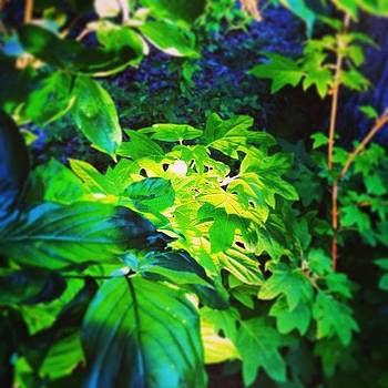 Beautiful Plants Lit On The Trails At by Nadine Rippelmeyer
