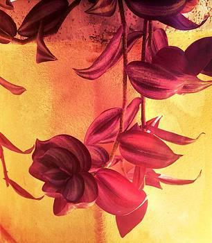 Beautiful Things by Cigdem Cigdem