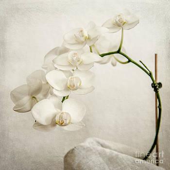 Hannes Cmarits - Beautiful white orchid II