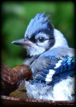 Beautifully Blue by Terri K Designs
