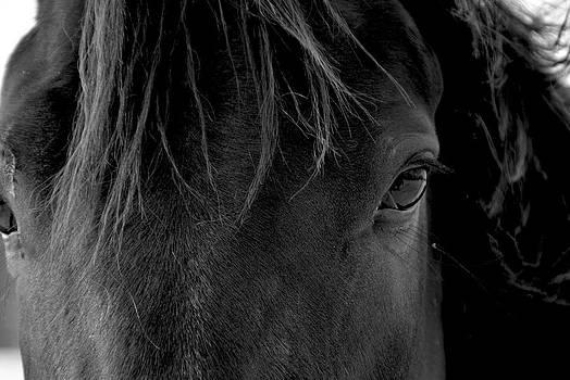 Beauty by Darlene Watson