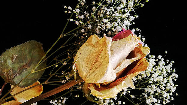 Beauty In Baby's Breath by Tanya Jacobson-Smith